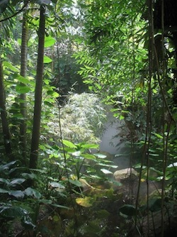 Hundreds of New Amazon Species Discovered